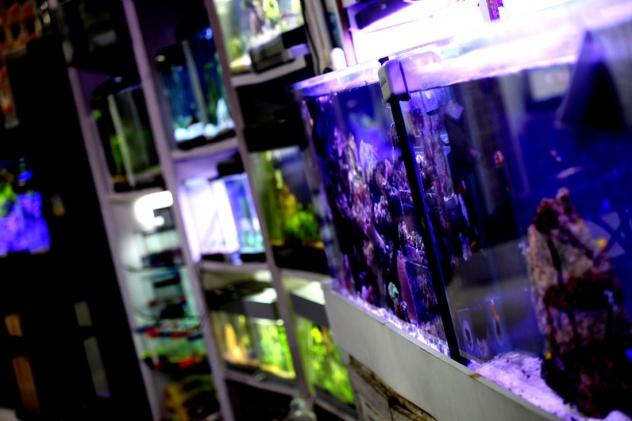 Pet Shop Boutiquarium_Boutiquarium_Banho e Tosa_ Aquarismo_ Aquarios em Florianopolis (2)