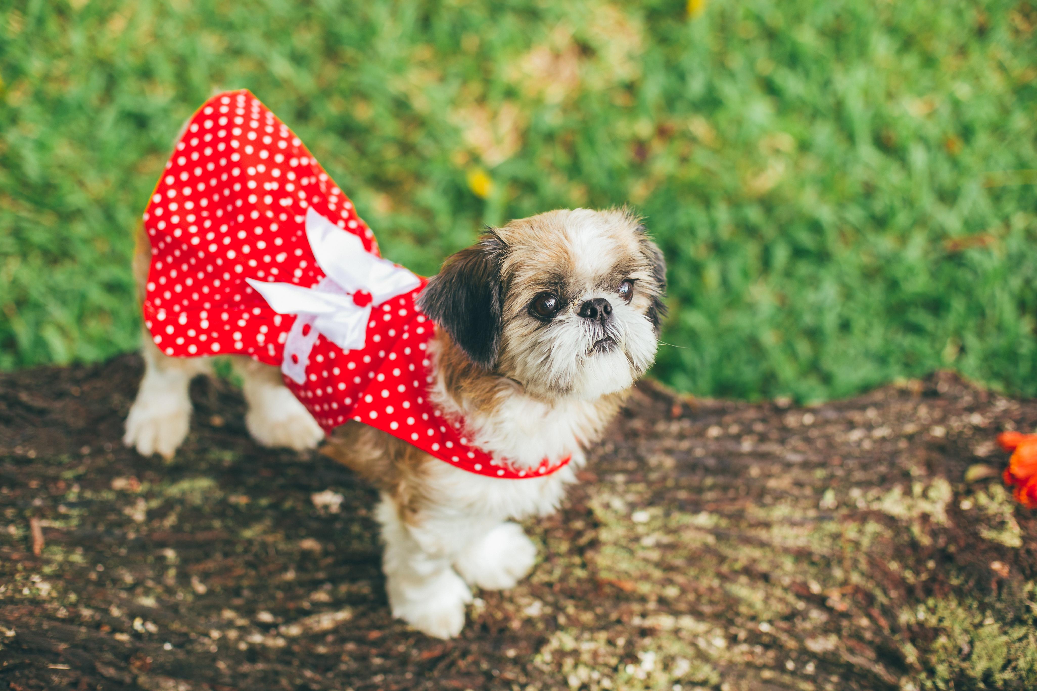 mimos moda pet_ roupas para cachorros_ roupas para crianças e cachorro iguais (10)